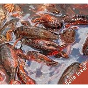LIVE Louisiana Crawfish (Belle River) w/ seasoning