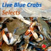 Live Crabs (SELECT)