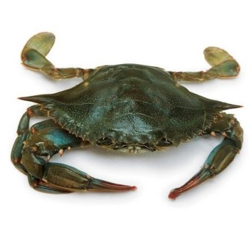 Soft Shell Crab (Large)
